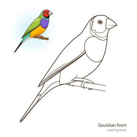 pets background: Gouldian finch bird learn birds educational game coloring book vector illustration Stock Photo