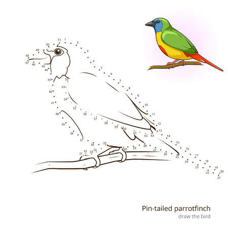 Pin Tailed Parrotfinch Learn Birds Educational Game To Draw Vector Illustration