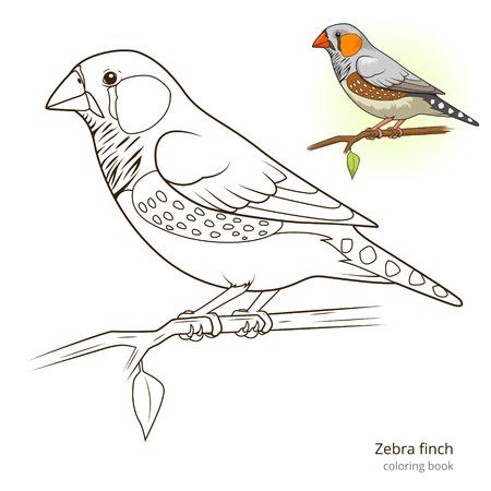 Zebravink vogel leren vogels educatief spel kleurboek vector illustratie