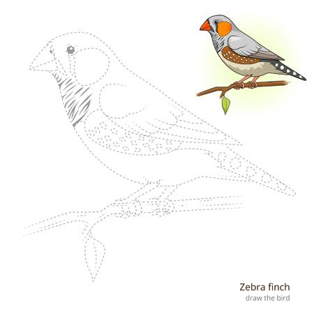 finch: Zebra finch learn birds educational game learn to draw vector illustration