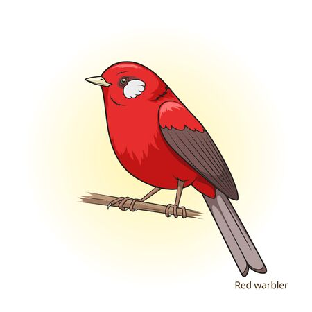 dyeing: Red warbler bird learn birds educational game vector illustration