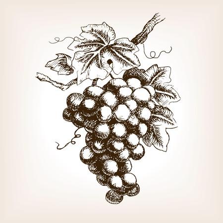 VID: Racimo de uvas estilo de ilustración vectorial boceto. Grabado antiguo de imitación. boceto dibujado a mano de imitación