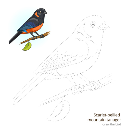 scarlet: Scarlet bellied mountain tanager learn birds educational game learn to draw vector illustration