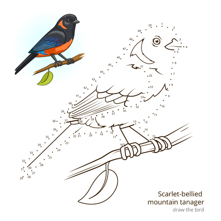 Scarlet Bellied Mountain Tanager Learn Birds Educational Game To Draw Vector Illustration