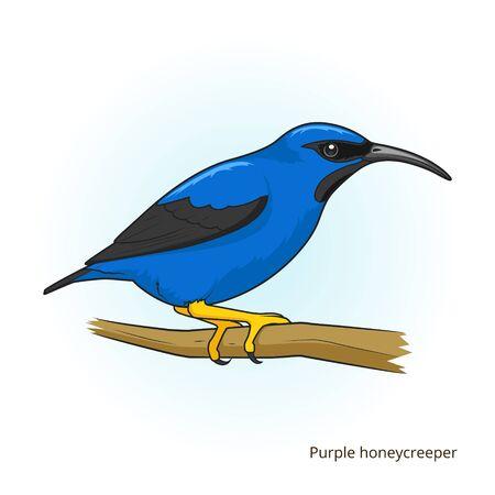 game bird: Purple honeycreeper bird learn birds educational game vector illustration Illustration