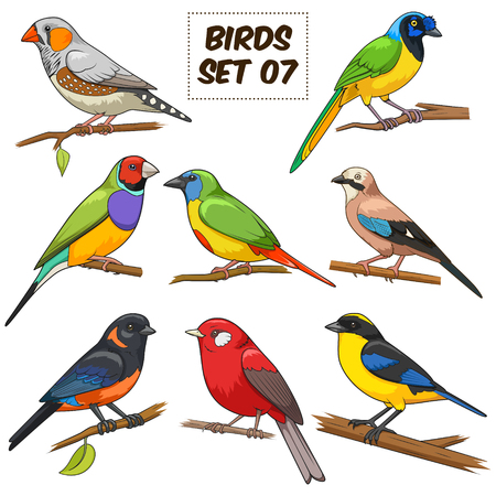 Bird set cartoon colorful vector illustration. Educational material 矢量图像