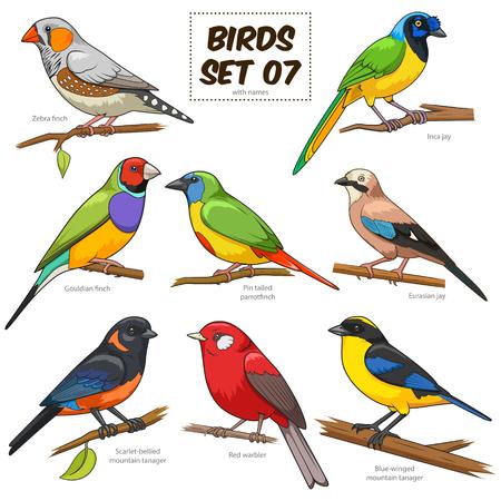 Vogel set cartoon kleurrijke vector illustratie. educatief materiaal