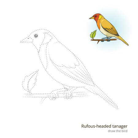 headed: Rufous headed tanager learn birds educational game learn to draw vector illustration Illustration
