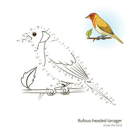 rufous: Rufous headed tanager learn birds educational game learn to draw vector illustration Illustration
