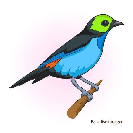 bird of paradise: Paradise tanager bird learn birds educational game vector illustration