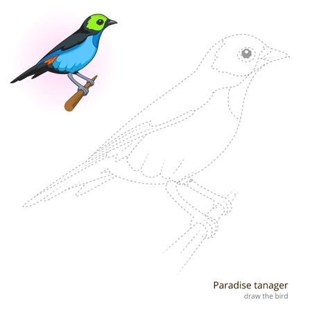 birds of paradise: Paradise tanager learn birds educational game learn to draw vector illustration