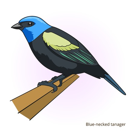 necked: Blue necked tanager bird learn birds educational game vector illustration Illustration