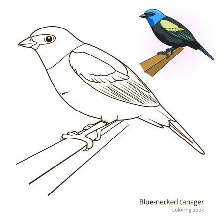 necked: Blue necked tanager bird learn birds educational game coloring book vector illustration Illustration