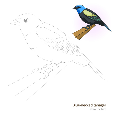 Blue necked tanager learn birds educational game learn to draw vector illustration