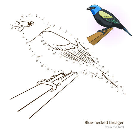 necked: Blue necked tanager learn birds educational game learn to draw vector illustration