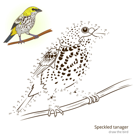 Speckled tanager learn birds educational game learn to draw vector illustration