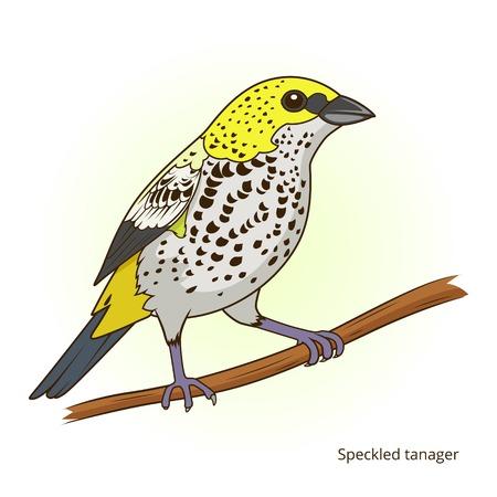 speckled: Speckled tanager bird learn birds educational game vector illustration Illustration