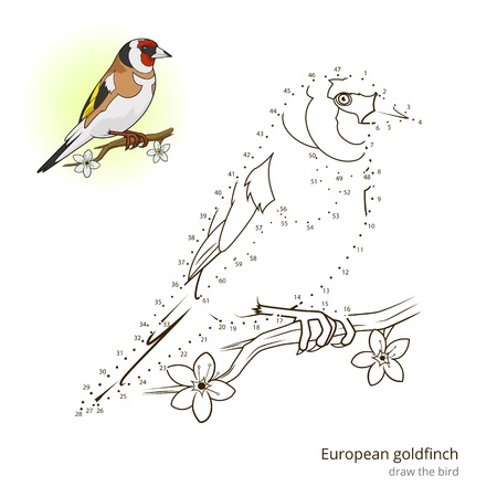 European goldfinch learn birds educational game learn to draw vector illustration Иллюстрация