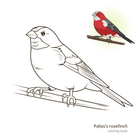 game bird: bird learn birds educational game coloring book illustration Illustration