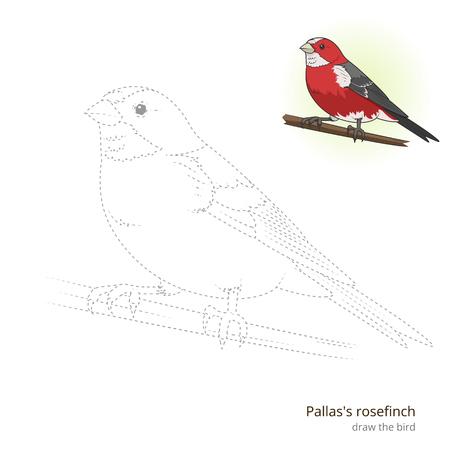 pallas: Pallas rosefinch learn birds educational game learn to draw illustration