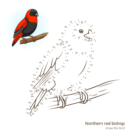 dyeing: Northern red bishop learn birds educational game learn to draw vector illustration