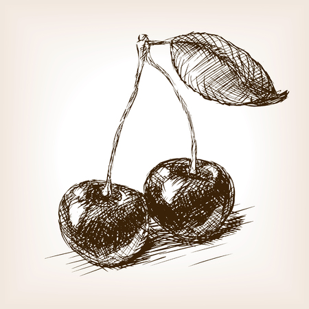 berry: Cherry berry sketch style  vector illustration. Old hand drawn engraving imitation. Berry fruit illustration