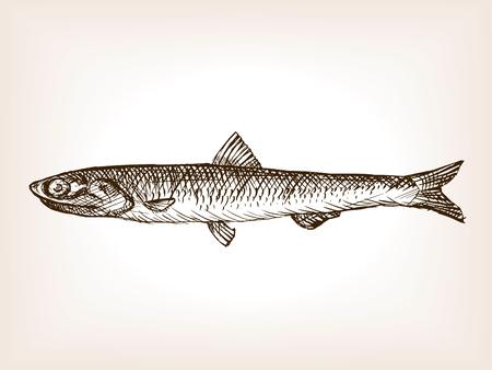 ilustración del vector del estilo del bosquejo de pescado anchoa. Vieja mano dibuja la imitación de grabado. Ilustración de los pescados de la anchoa Ilustración de vector