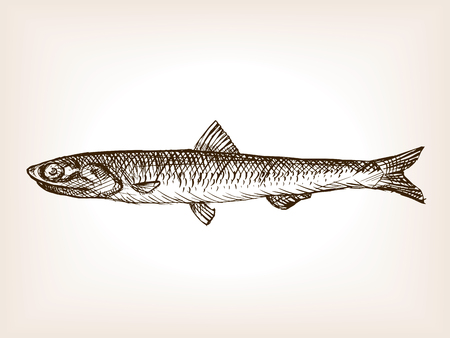 Anchovy fish sketch style  vector illustration. Old hand drawn engraving imitation. Anchovy fish illustration Illustration