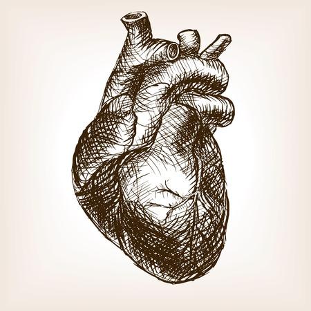 croquis du c?ur humain style vecteur illustration. Old tiré par la main Gravure imitation. Coeur illustration