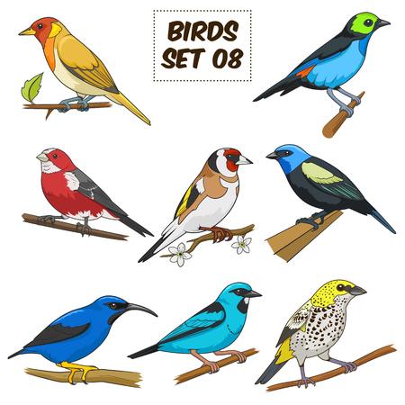 ave del paraiso: Conjunto de aves de dibujos animados colorido ilustración vectorial. Material educativo