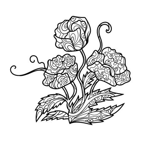 Amapola Libro Para Colorear Flor Para Adultos Ilustración ...