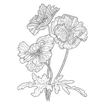 Libro de colorear de flores de amapola para adultos ilustración. Colorante antiestrés para adulto. estilo. Líneas en blanco y negro Patrón de encaje