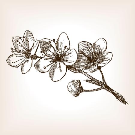 Kirschblüten Skizze Stil Abbildung. Alte Gravur Nachahmung. Kirschblüte Handskizze Nachahmung gezeichnet