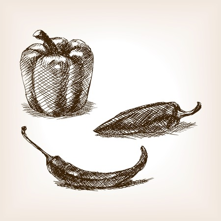 sharpness: Peppers sketch style illustration. Old engraving imitation. Peppers hand drawn sketch imitation