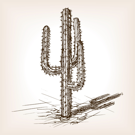 hand drawn: Cactus sketch style vector illustration. Old engraving imitation. Cactus hand drawn sketch imitation