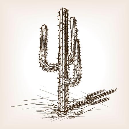 plantas del desierto: ilustración vectorial de estilo de dibujo Cactus. Grabado antiguo de imitación. Cactus mano dibujada imitación boceto