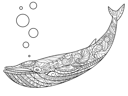adults: Whale coloring book for adults vector illustration.