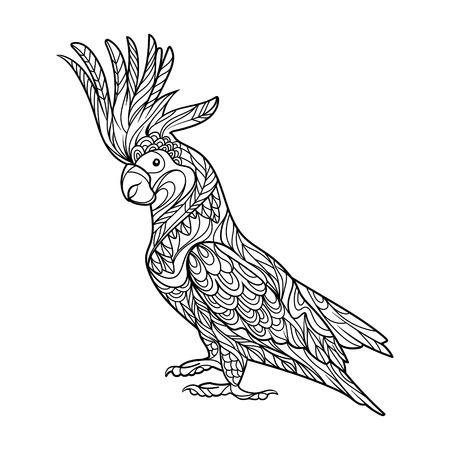 Cockatoo loro libro para colorear de aves para la ilustración vectorial adultos.