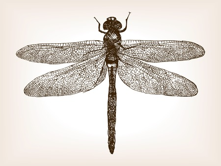 illustration line art: Dragonfly insect sketch style vector illustration. Old engraving imitation. Dragonfly insect hand drawn sketch imitation
