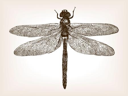 xilografia: Libélula ilustración vectorial del estilo del bosquejo del insecto. Grabado antiguo de imitación. Libélula insectos dibujados a mano dibujo de imitación