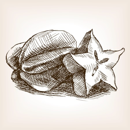 rough draft: Carambola fruit sketch style illustration. Old engraving imitation. Carambola fruit sketch imitation