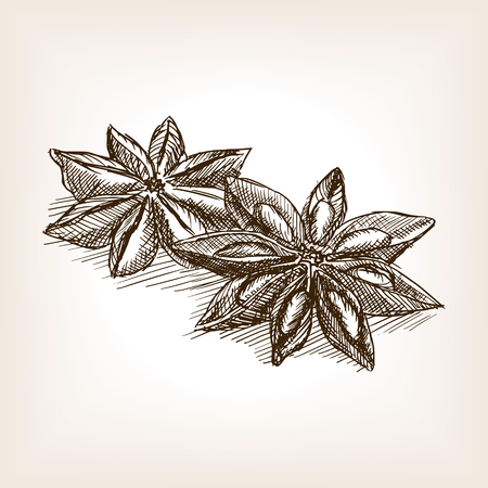 Star anise sketch style vector illustration. Old engraving imitation. Star anise hand drawn sketch imitation