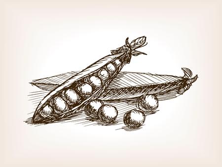 エンドウ豆は、スタイルのベクトル図をスケッチします。古い彫刻の模倣。エンドウ豆の手描きスケッチの模倣