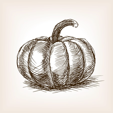 rough draft: Pumpkin sketch style vector illustration. Old engraving imitation. Pumpkin hand drawn sketch imitation Illustration