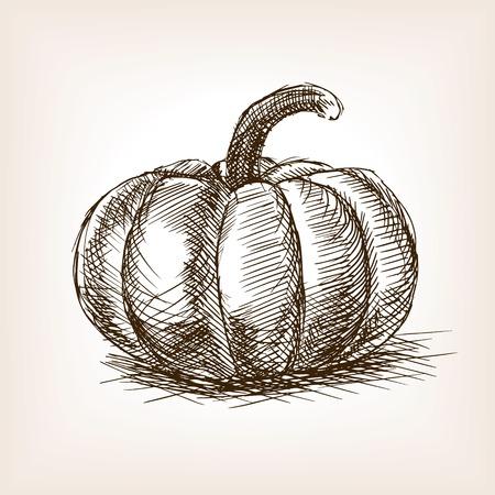 Pumpkin sketch style vector illustration. Old engraving imitation. Pumpkin hand drawn sketch imitation Çizim