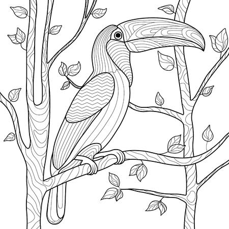 Toucan Vogel Malbuch für Erwachsene Vektor-Illustration. Anti-Stress für erwachsene Färbung. Toucan Vogel zentangle Art. Schwarze und weiße Linien. Spitzenmuster Vektorgrafik
