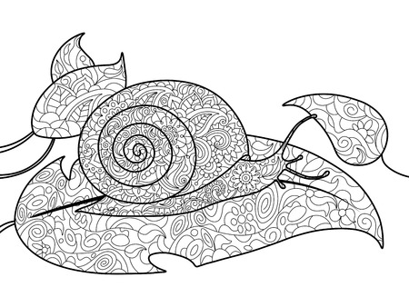 sharp curve: Snail coloring book for adults vector illustration. Anti-stress coloring for adult. Black and white lines. Lace pattern