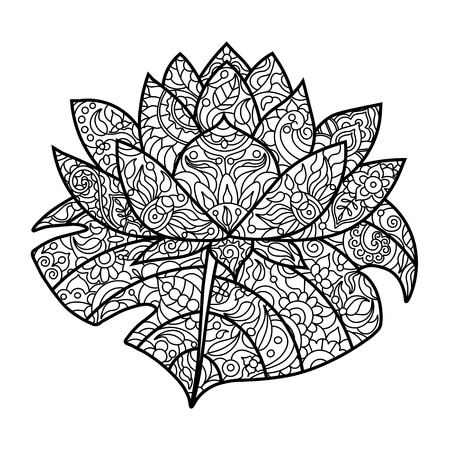 Lotus Water Lily Flower Coloring Book For Adults Vector Illustration Anti Stress
