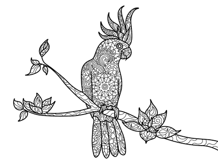 cockatoo: Cockatoo parrot bird coloring book for adults vector illustration. style. Black and white lines. Lace pattern