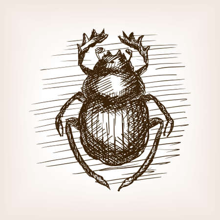 scarab: Scarab beetle insect sketch style vector illustration. Old engraving imitation.